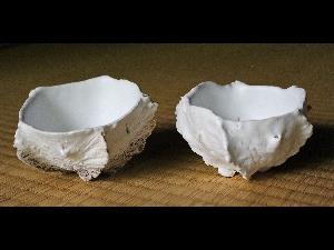'White Form' Shell Guinomi by Koike Shoko